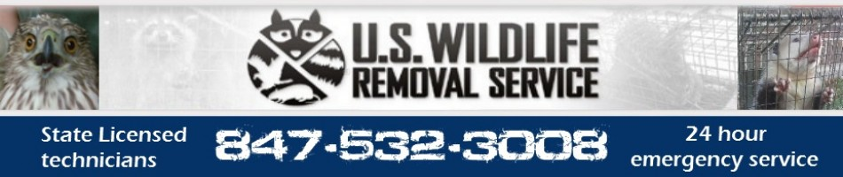 Island Lake Wildlife Removal