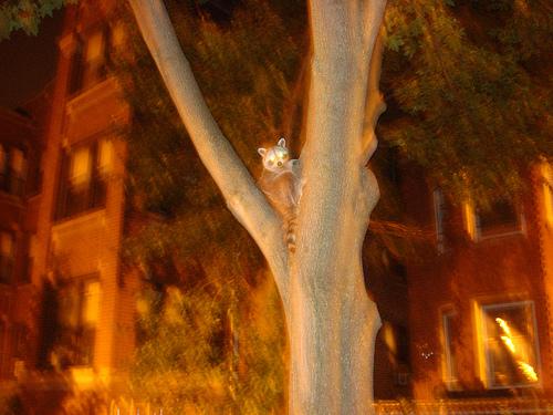 squirrel removal near me