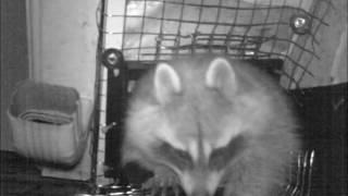 Humane Wildlife Removal Avon, Illinois